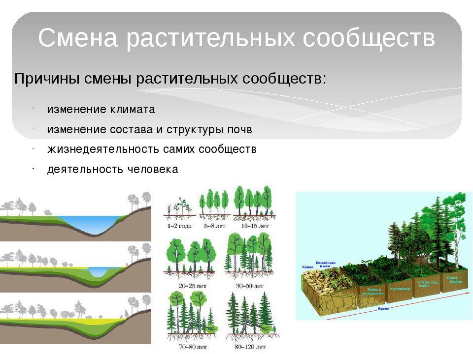 Причины смены растительных сообществ: Смена растительных сообществ изменение...
