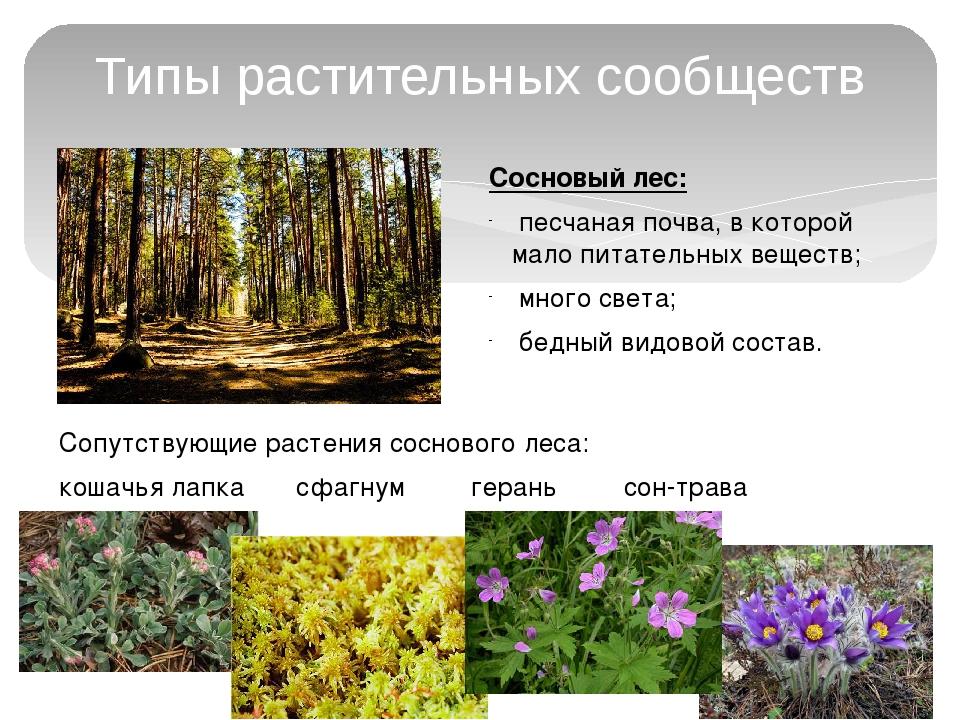 Типы растительных сообществ Сосновый лес: песчаная почва, в которой мало пита...