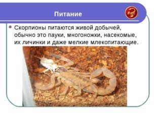 Скорпионы питаются живой добычей, обычно это пауки, многоножки, насекомые, их