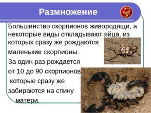 Большинство скорпионов живородящи, а некоторые виды откладывают яйца, из кото