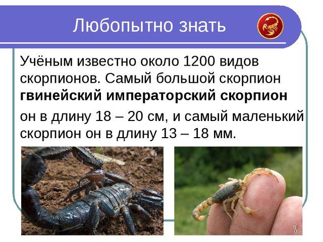 Учёным известно около 1200 видов скорпионов. Самый большой скорпион гвинейски...