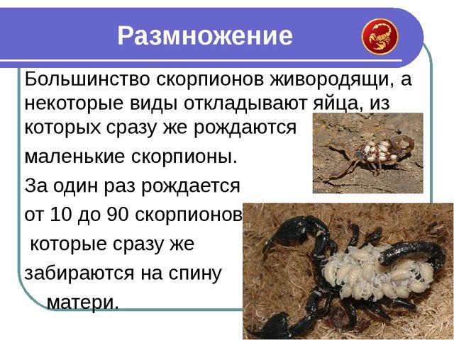 Большинство скорпионов живородящи, а некоторые виды откладывают яйца, из кото...