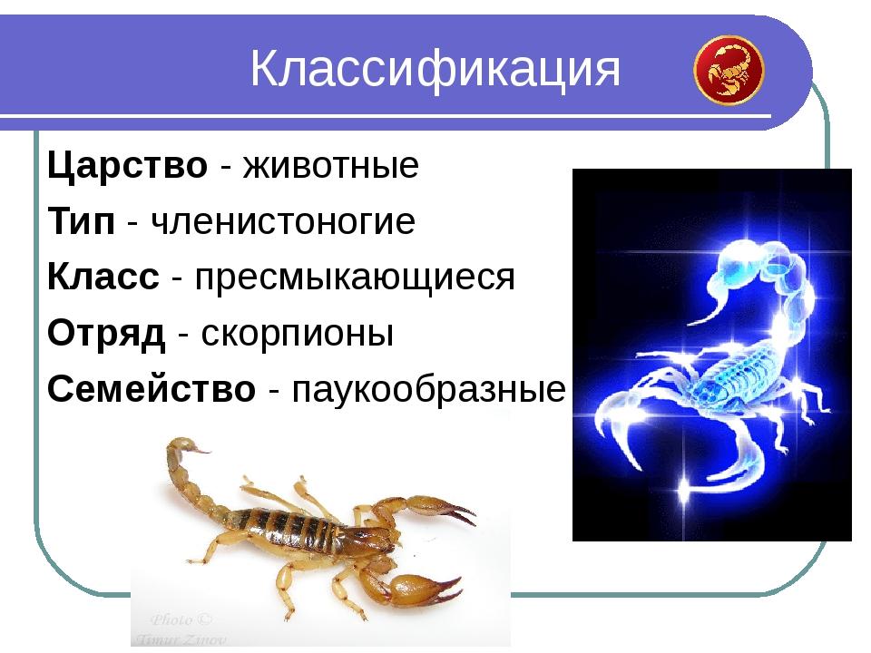 Царство - животные Тип - членистоногие Класс - пресмыкающиеся Отряд - скорпио...
