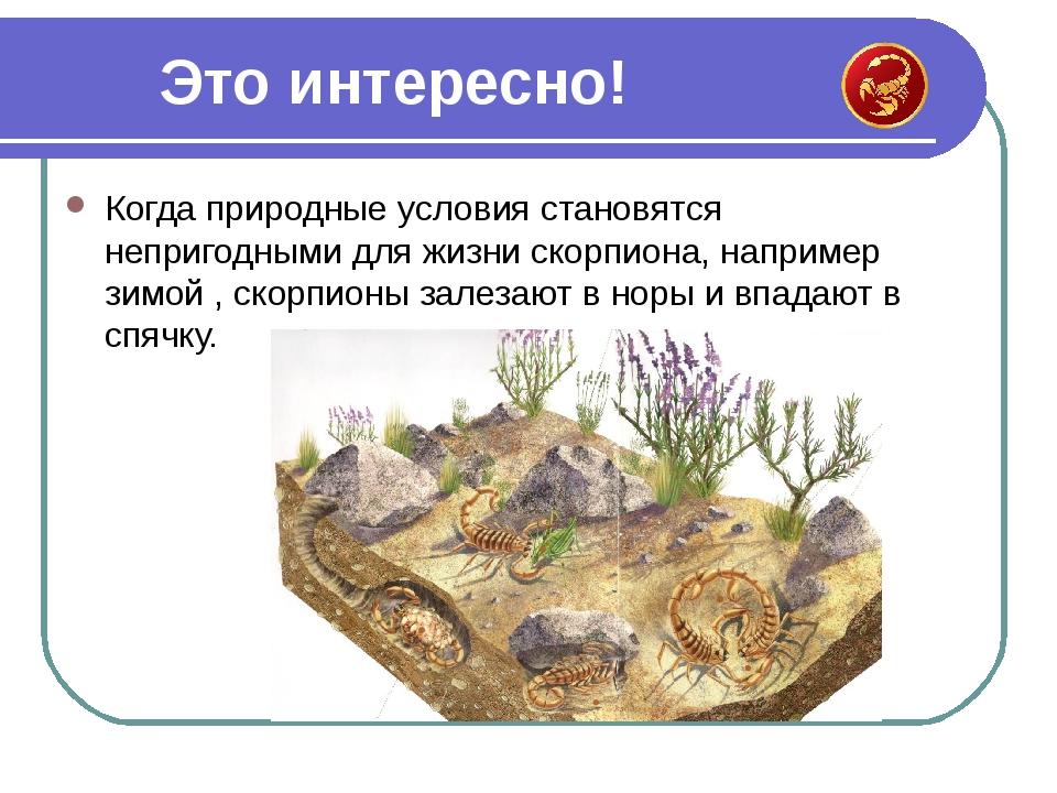 Когда природные условия становятся непригодными для жизни скорпиона, например...