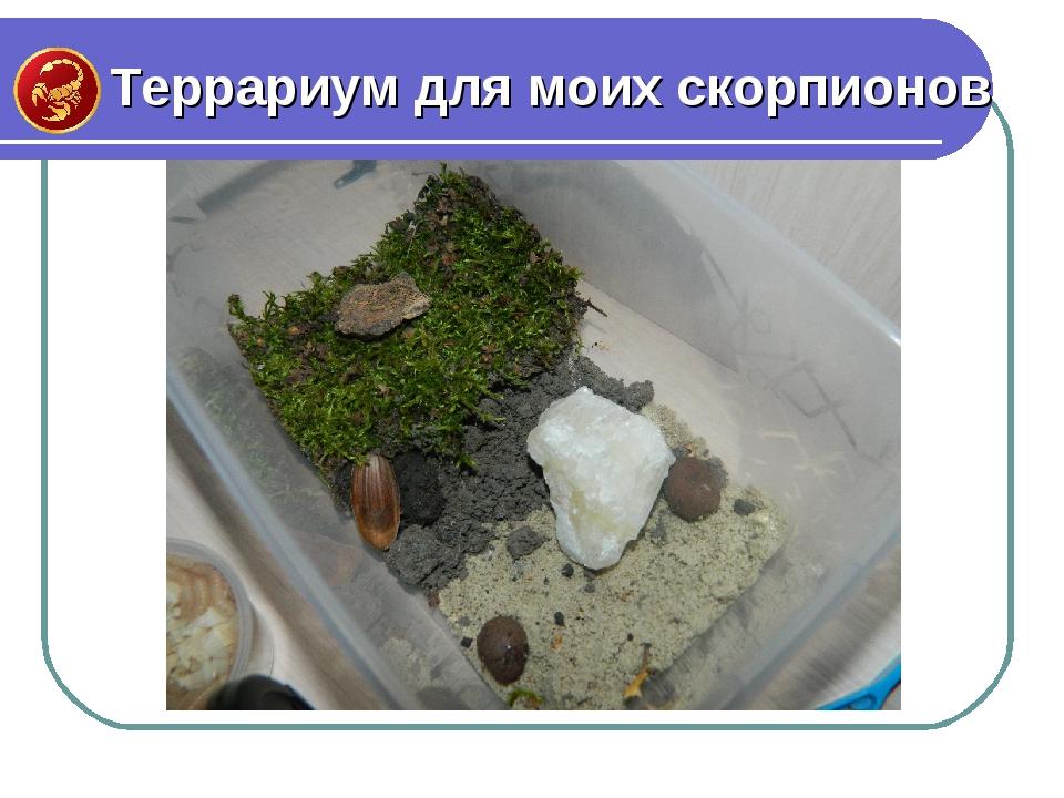 Террариум для моих скорпионов