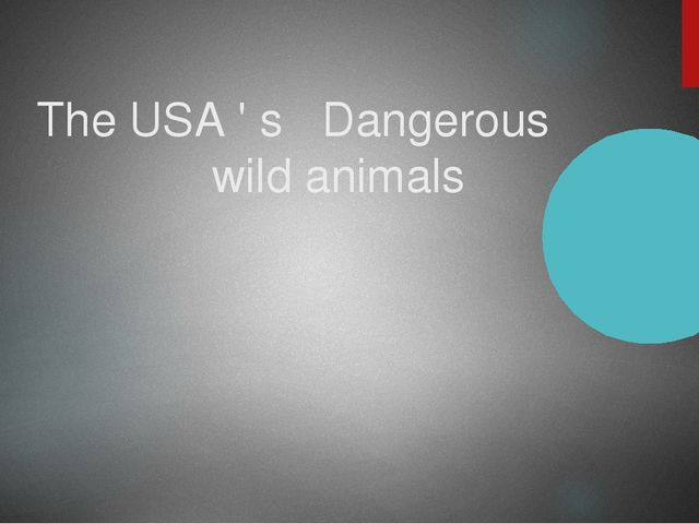 The USA ' s Dangerous wild animals