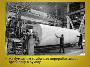 На бумажном комбинате перерабатывают древесину в бумагу.