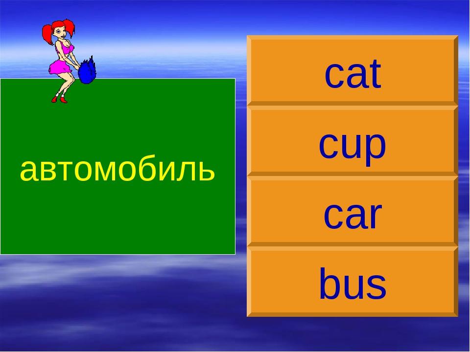 автомобиль car cup cat bus
