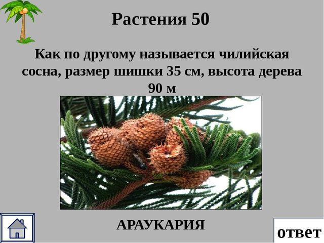 Растения 40 ответ Сельва «страна лиан», из корней этого вида индейцы делают я...