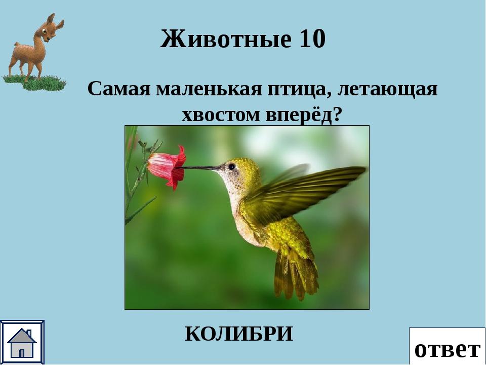 ответ Животные 50 Это животное одомашнивали индейцы для получения шерсти, а т...