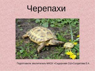 Черепахи Подготовила :воспитатель МКОУ «Сидорская СШ»Солдатова Е.А.