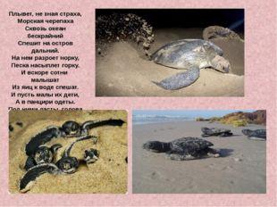 Плывет, не зная страха, Морская черепаха Сквозь океан бескрайний Спешит на ос