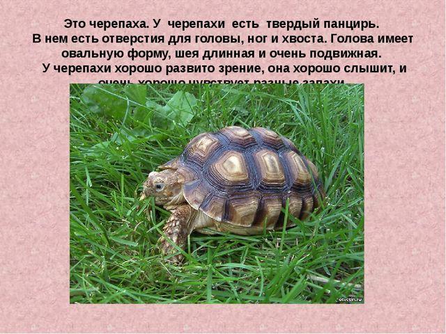 Это черепаха. У черепахи есть твердый панцирь. В нем есть отверстия для голов...