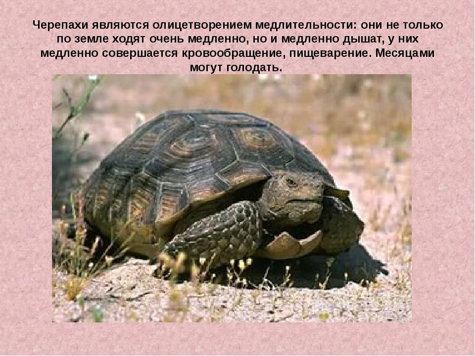 фармер рассказ о черепах с картинками дизайн