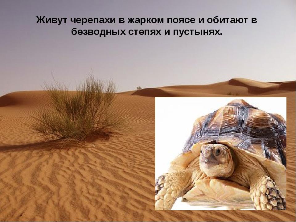 Живутчерепахив жарком поясе и обитают в безводных степях и пустынях.