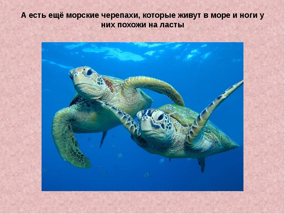 А есть ещё морские черепахи, которые живут в море и ноги у них похожи на ласты
