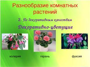Разнообразие комнатных растений 2. По декоративным качествам Декоративно-цвет