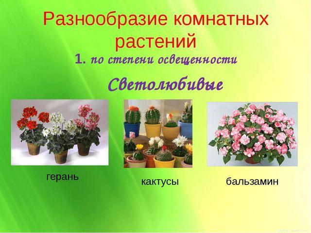 Разнообразие комнатных растений 1. по степени освещенности Светолюбивые геран...
