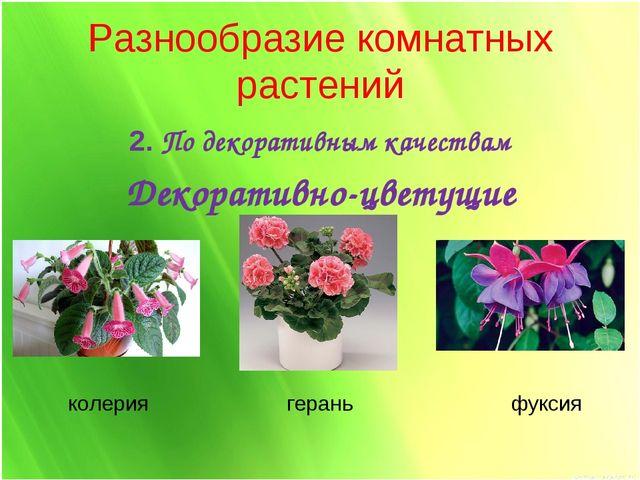 Разнообразие комнатных растений 2. По декоративным качествам Декоративно-цвет...
