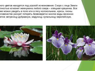 Много цветов находятся под угрозой исчезновения. Скоро с лица Земли полностью