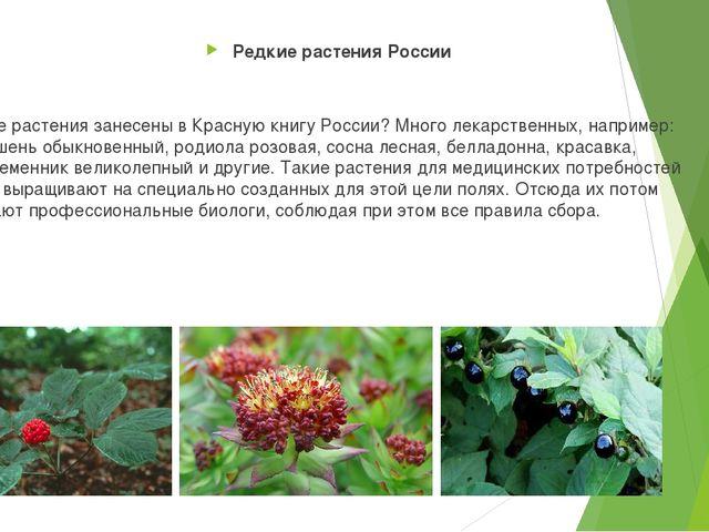 Какие растения занесены в Красную книгу России? Много лекарственных, наприме...