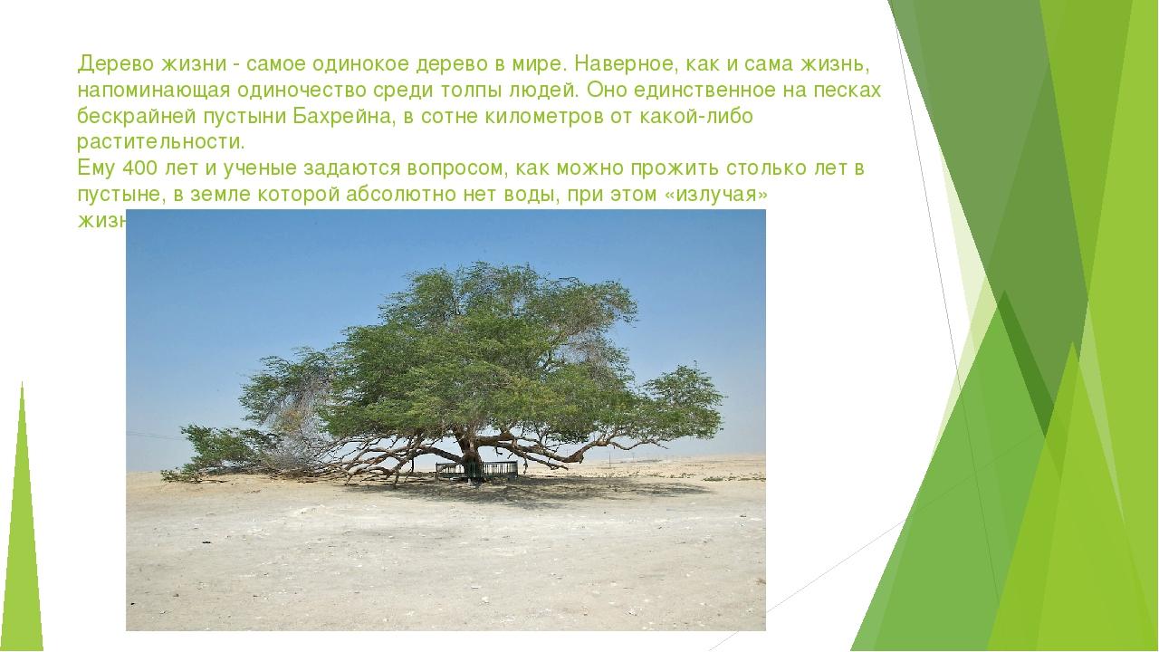Дерево жизни - самое одинокое дерево в мире. Наверное, как и сама жизнь, напо...