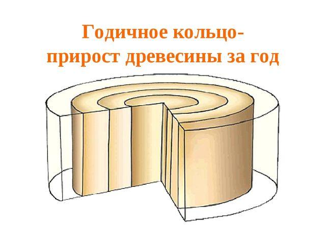 Годичное кольцо- прирост древесины за год
