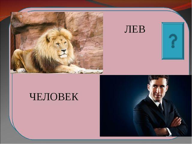 План Выставка 2. Встреча льва и собачки 3.Дружба 4.Горе, боль ЛЕВ ЧЕЛОВЕК