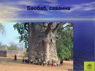 Баобаб, саванна