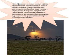 Часть Африканского континента занимают саванны, проросшие травой, часто выго