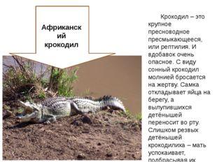 Крокодил – это крупное пресноводное пресмыкающееся, или рептилия. И вдобавок