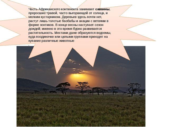 Часть Африканского континента занимают саванны, проросшие травой, часто выго...