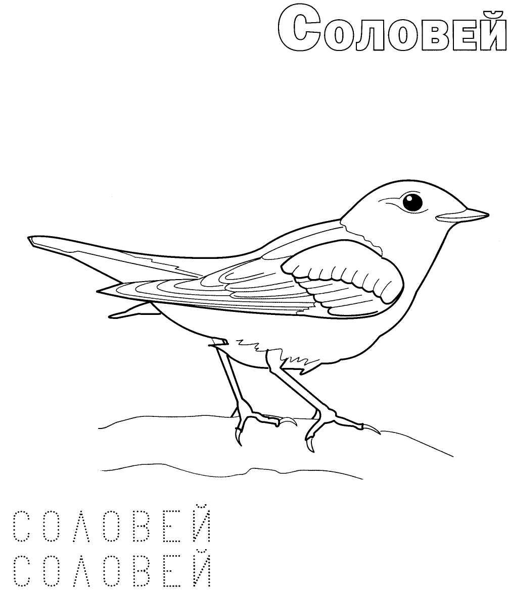 Картинки раскраски птиц для детей с названиями