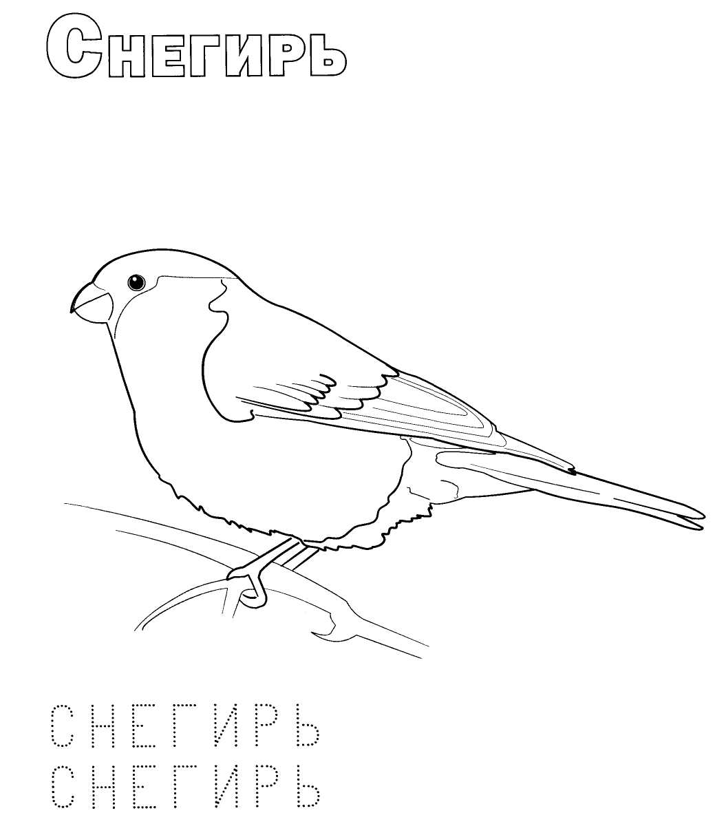 распечатать раскраски зимующие птицы надеть светлые