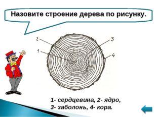 Назовите строение дерева по рисунку. 1- сердцевина, 2- ядро, 3- заболонь, 4-