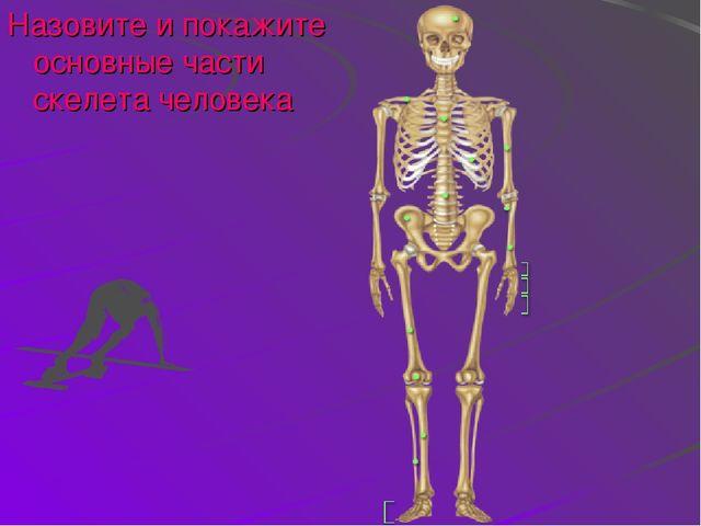 Назовите и покажите основные части скелета человека