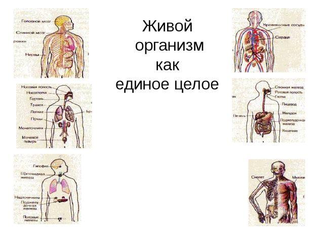 Живой организм как единое целое