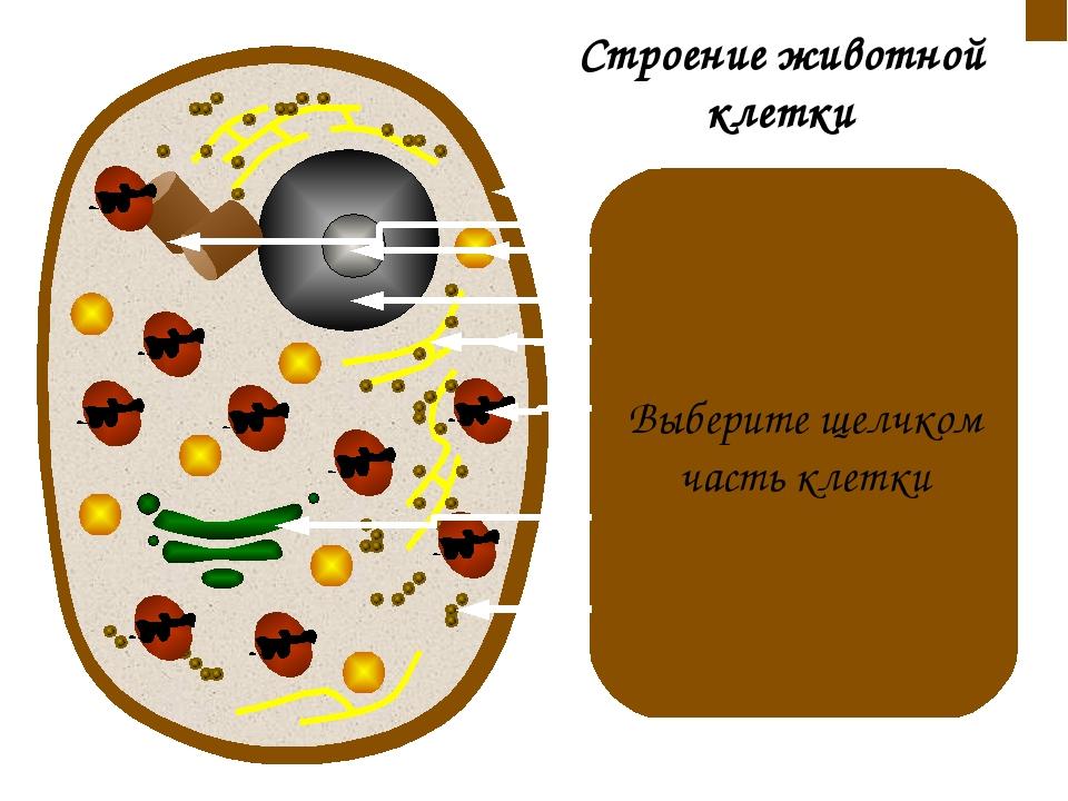 Клеточная мембрана находится под клеточной стенкой. Функции: ограничивает сод...