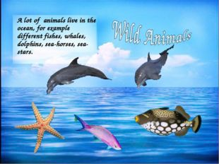 A lot of animals live in the ocean, for example different fishes, whales, dol