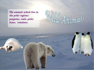 The animals which live in the polar regions: penguins, seals, polar bears, re