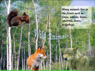 Many animals live in the forest such as foxes, wolves, bears, squirrels, hear