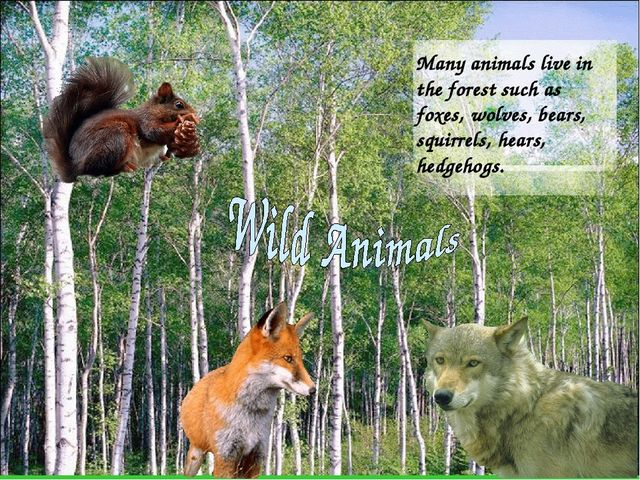 Many animals live in the forest such as foxes, wolves, bears, squirrels, hear...