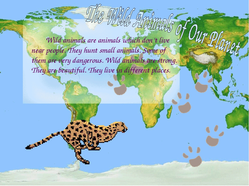 Wild animals are animals which don't live near people. They hunt small anima...