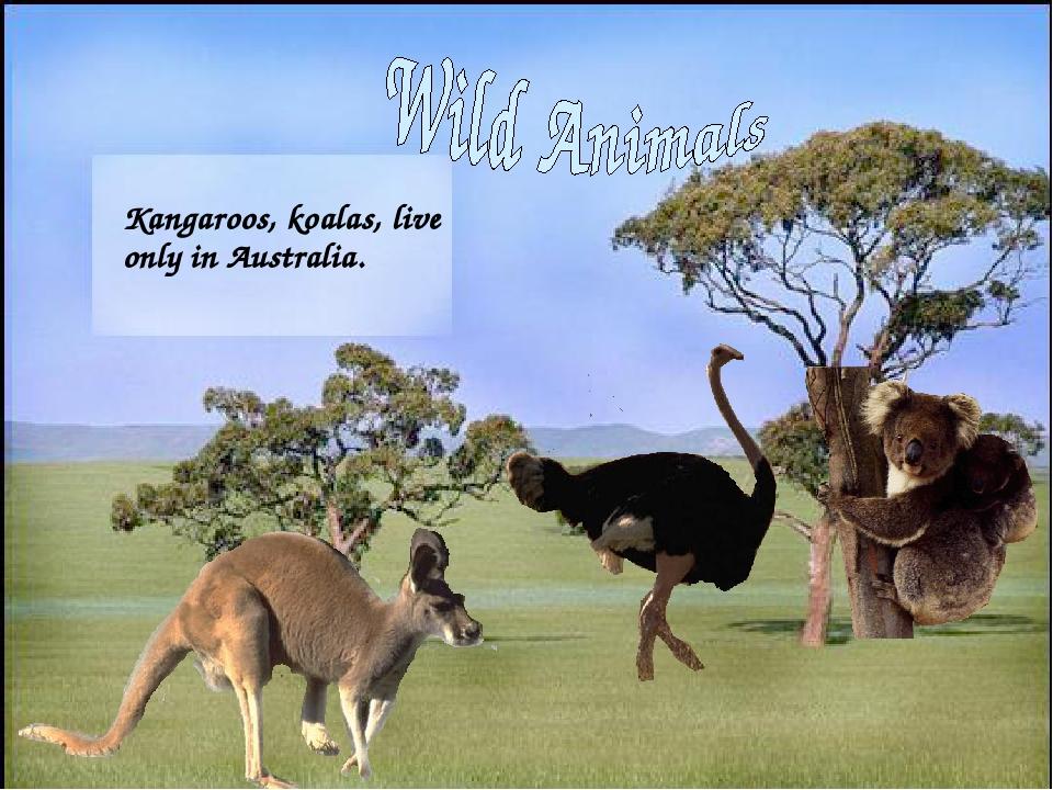 Kangaroos, koalas, live only in Australia.