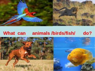 What can animals /birds/fish/ do?