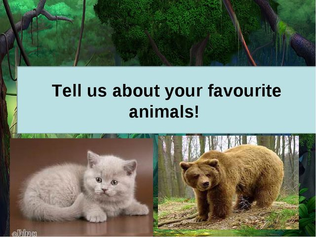 Tell us about your favourite animals!