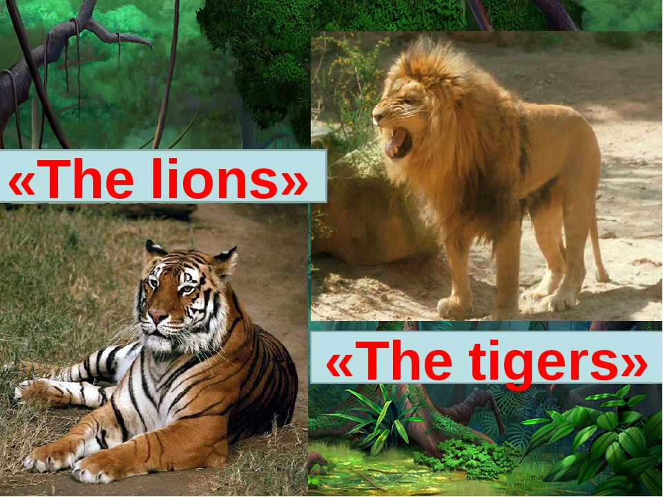 «The lions» «The tigers»