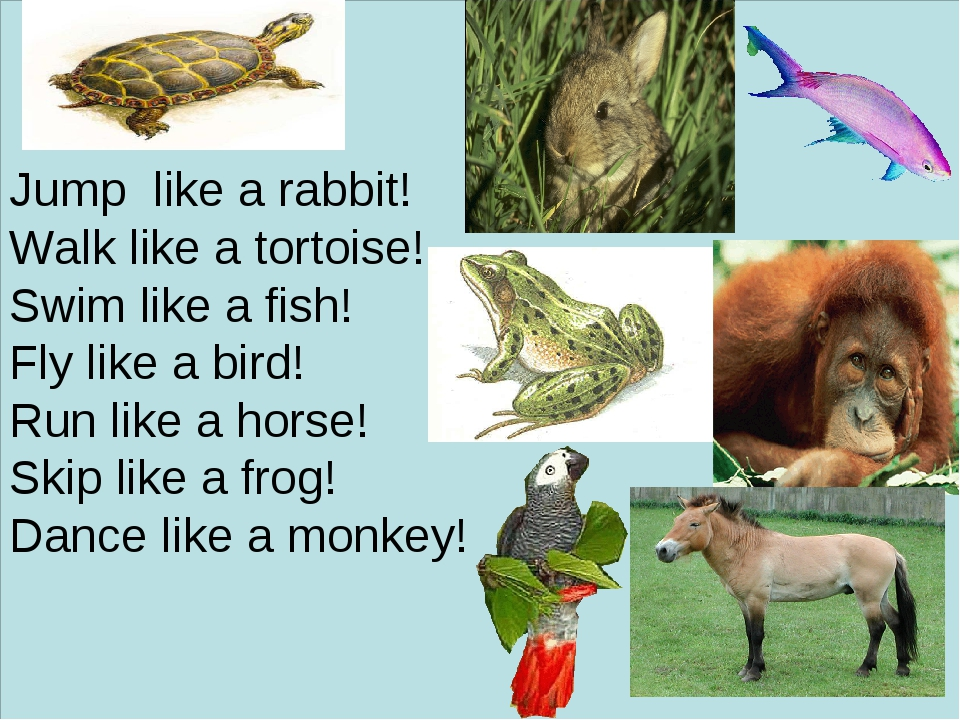 Jump like a rabbit! Walk like a tortoise! Swim like a fish! Fly like a bird!...