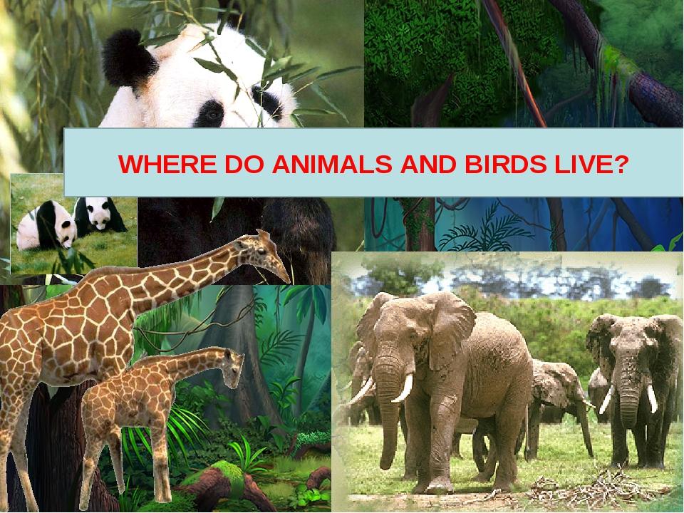 WHERE DO ANIMALS AND BIRDS LIVE?