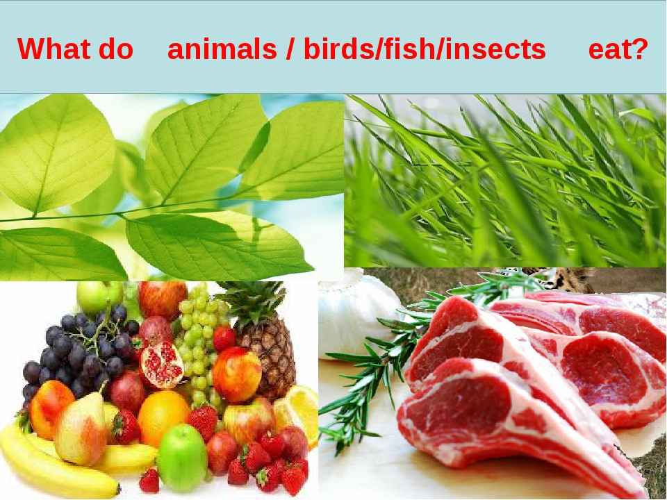 What do animals / birds/fish/insects eat?